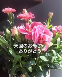 IMG_5282